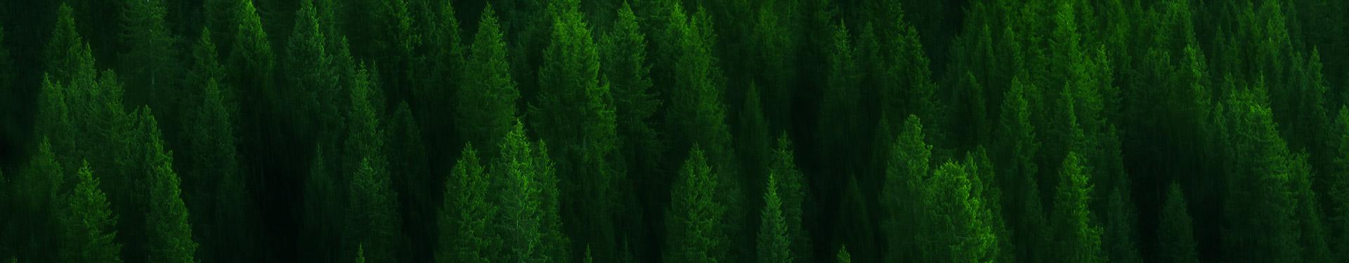 深圳市森视界景观规划设计有限公司海报图